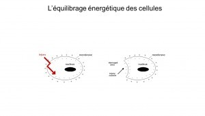 Equilibrage nrj cellulaire